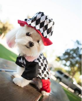 Amazing Magician Dress for Dog