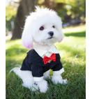 Fashion Dog Black Tuxedo