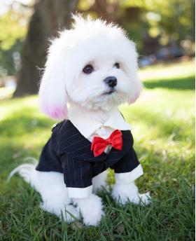 Fashion Dog Black Tuxedo