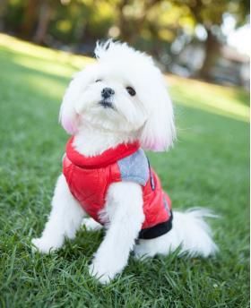 Fashion Dog Vest Jacket