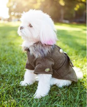 Winter Fashion Dog Noble Brown Coat