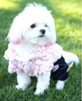 Fashion Dog Cute Pink Plush Coat