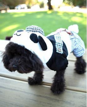 Cute Dog Panda Jacket